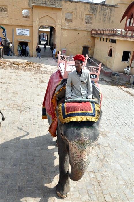 骑乘大象去!