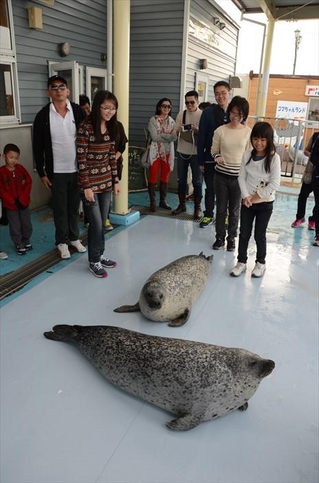 鄂霍次克海豹保育中心,是日本唯一的海豹保育中心。