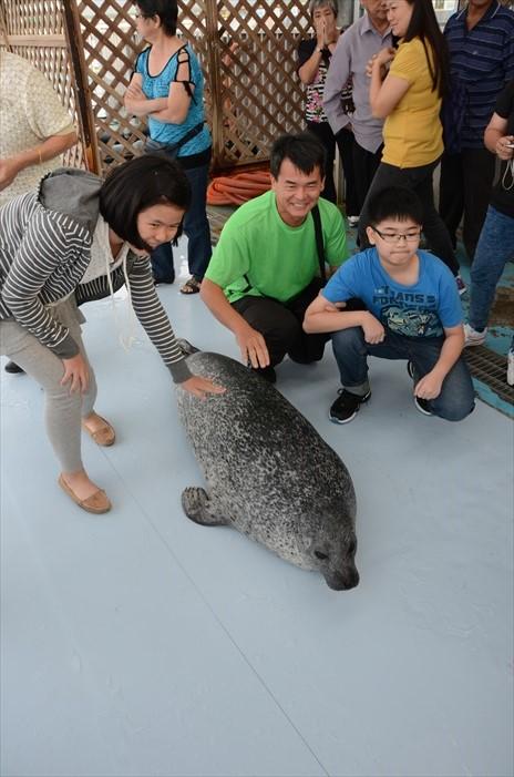 可爱的海豹乖乖躺在地上,但只能轻碰,并没任人鱼肉哦!
