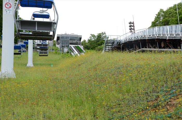 缆车下的草坪也并非只是单调的青色,还有红黄色笑话相伴。