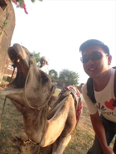 政雄:辛苦你了骆驼先生! 骆驼:累死老子了啦!