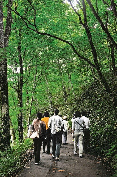 西田秀一先生说,漫步在白神山地,最好是平心静气地游览,避免多话以起降低血压的作用。