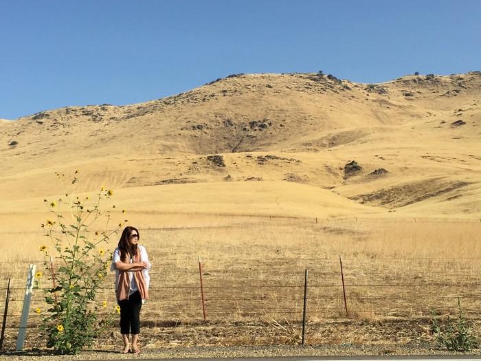 Fresno往Sequoia途中的原野山坡,土黄色植物的诱惑。