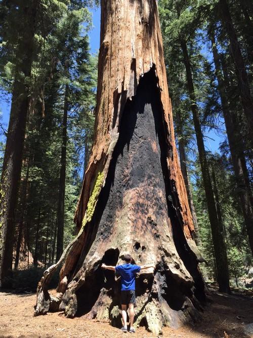 火神爱上红杉,彼此纠结。