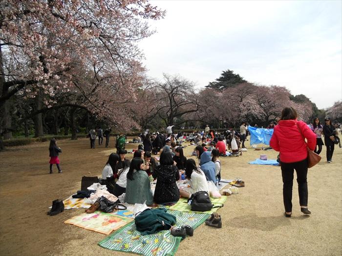 日本人的赏樱文化,值得大家窥究一番。