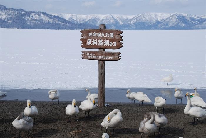别说游客,连天鹅都会飞来这里过冬。