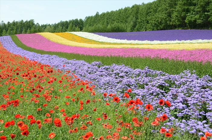 和不用颜色的花卉配色,组成了一条不撞色的彩色地毯。