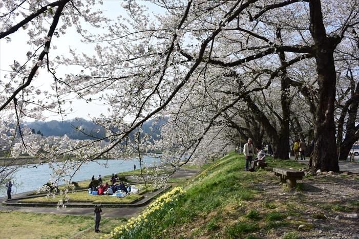 今年的日本东北赏樱地,景色优美,且散发弄弄悠闲味儿。
