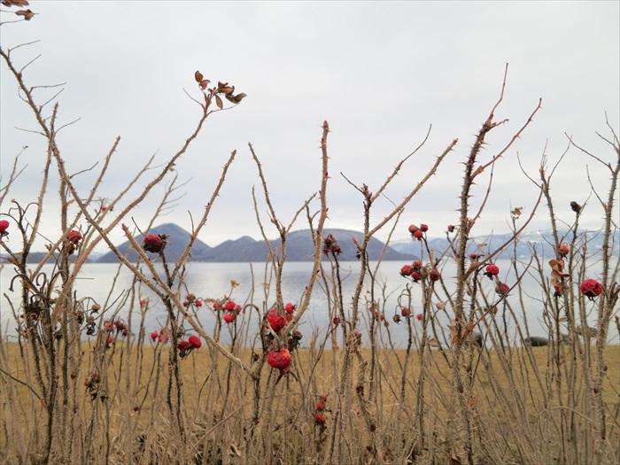 洞爷湖是个不冻湖,冬天四处枯枝白雪,它依旧水荡荡的。