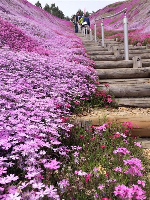 芝樱让这个楼梯,有步向幸福的感觉。