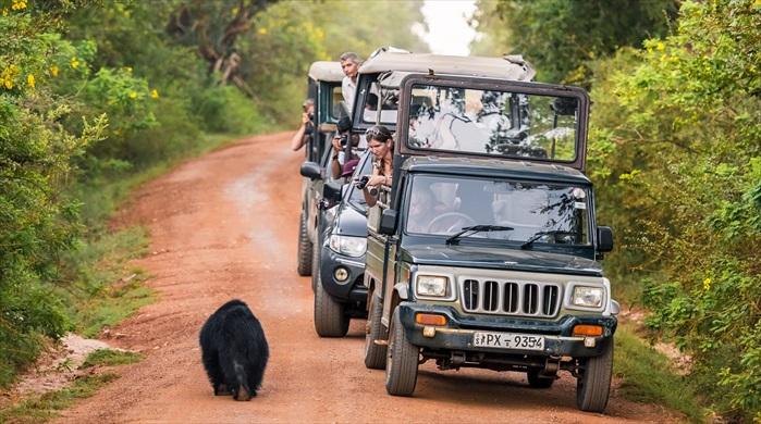 游客乘坐越野车探险,路途上,随时都会邂逅各种野生动物。