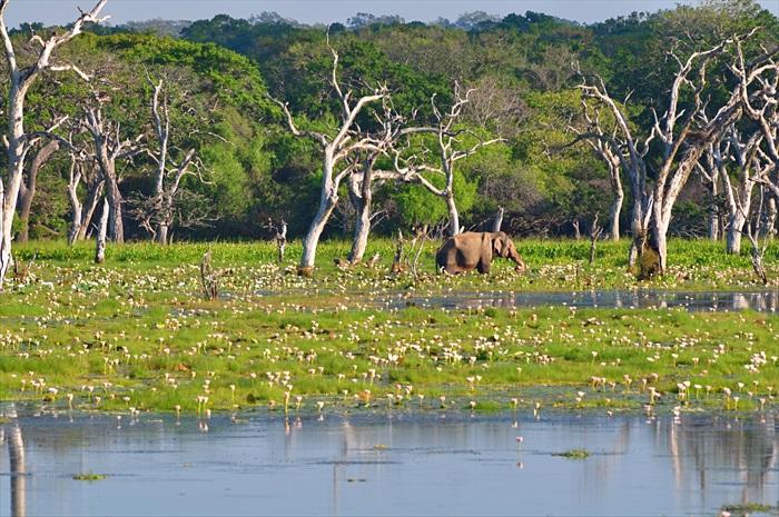 这里是斯里兰卡原生动植物的天堂。