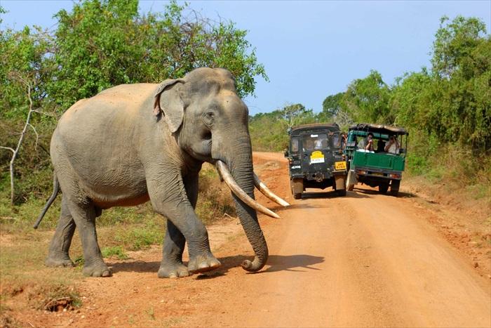其中,亚洲象是游客最想见到的物种之一。