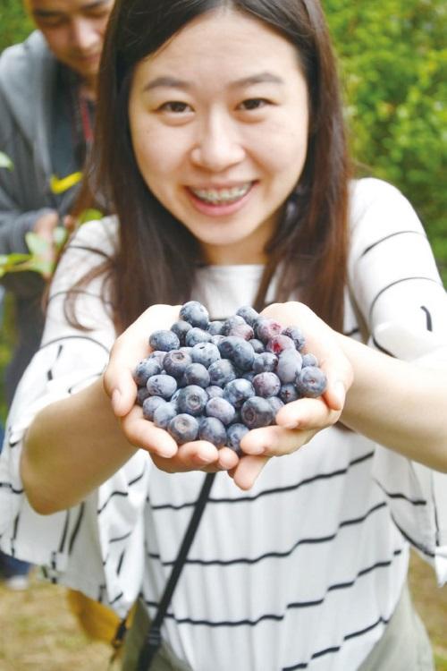 一颗颗成熟的蓝莓,没有化学药物,可以马上吃哦!(摄于雪霸休闲农场)