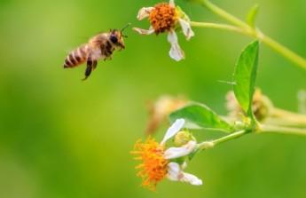 梁展维拍摄飞舞中的蜜蜂,成为逆转赛入选作品之一。