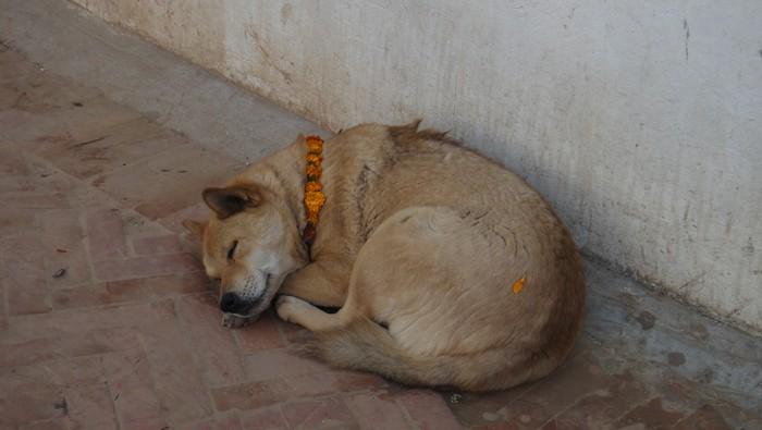 宗寺里的狗都睡得安详