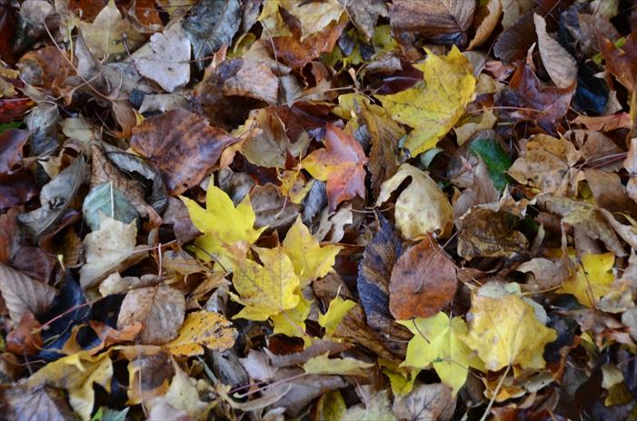 湖畔有的不只是鸭子,还有层层叠叠的落叶。