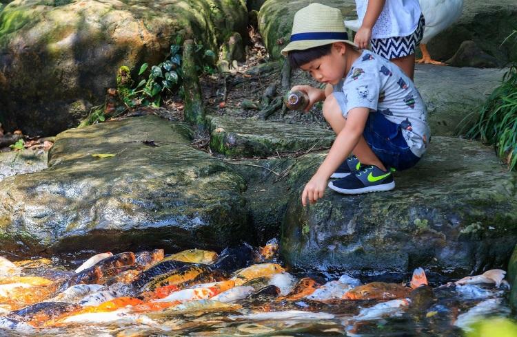 三富休閒农场环境优美,小朋友可以在这里给鲤鱼喂食,培养爱心。