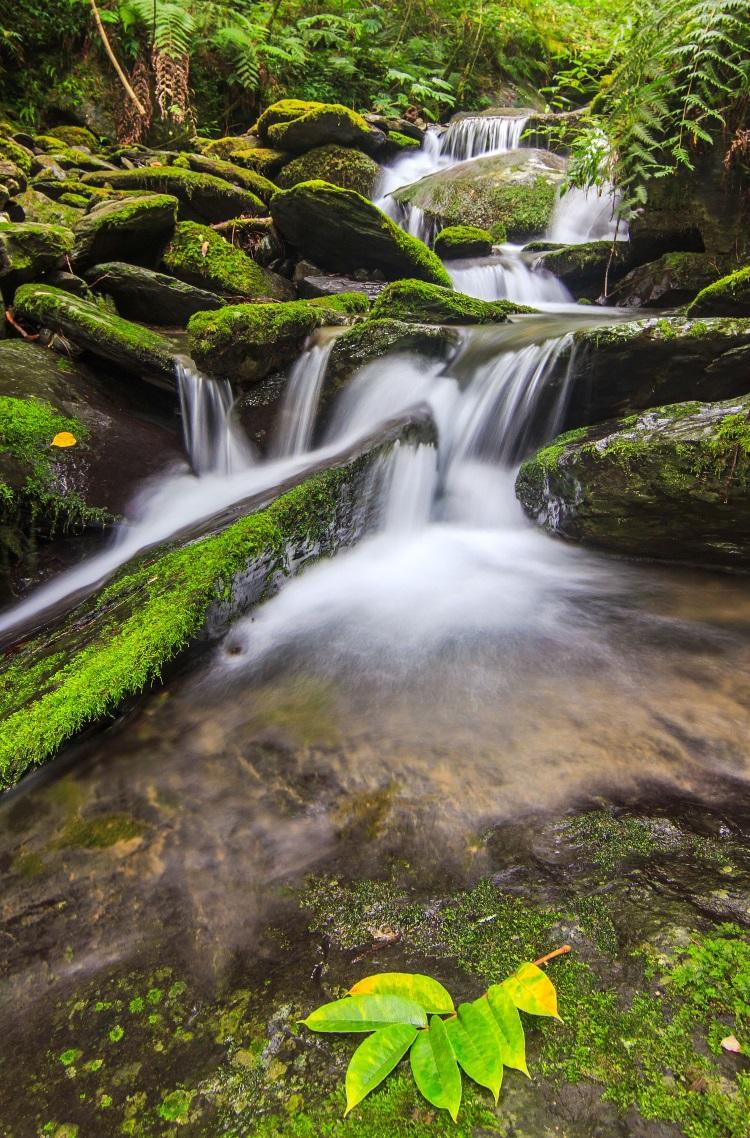 拉拉山神木区位于桃园县复兴乡和新北市乌来区交界,属于台湾面积最大的红桧森林里及自然保护区。游客可慢行步道,近距离观赏24棵神木,更不要忘了区中拥有苔藓溪流美景。