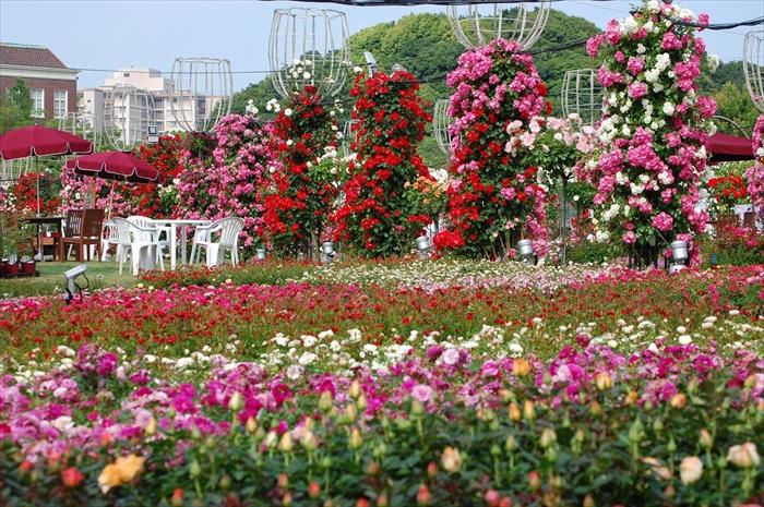 去年的秋季,则被浪漫的玫瑰占据。