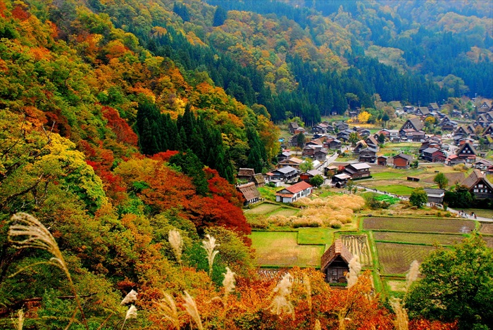 鸟瞰秋天的白川乡,其美我就不多加叙述了。