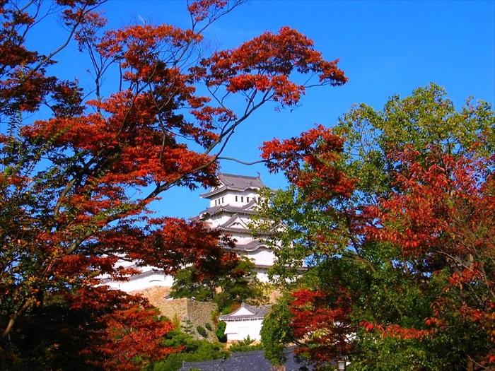 烈焰般的美丽红叶,都快将姬路城遮蔽完了!