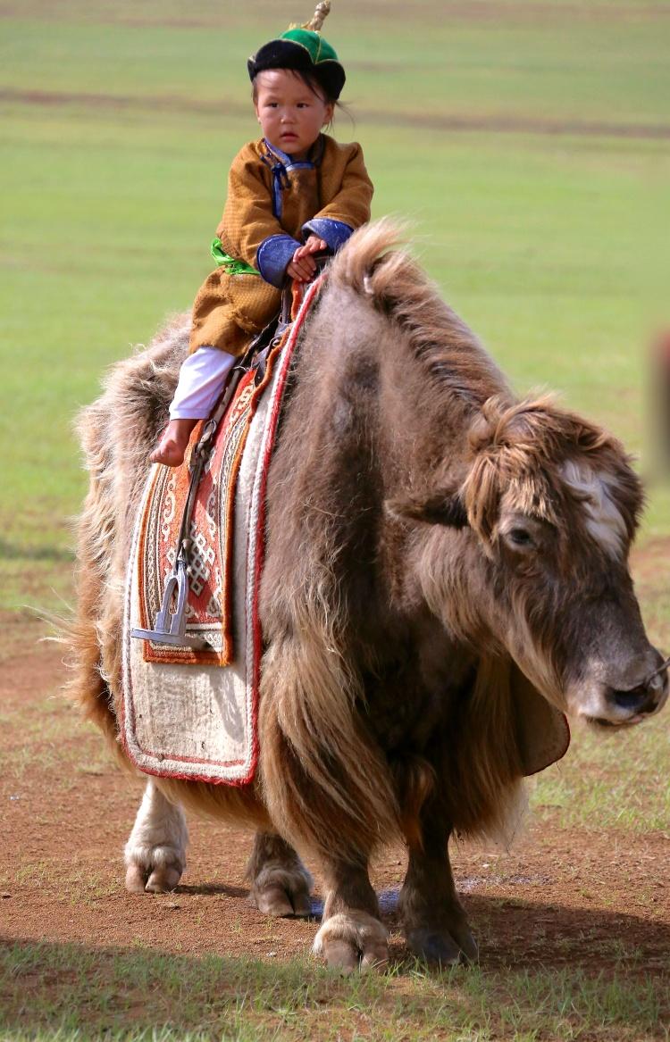 3岁蒙古小孩,骑在马背上(这只是牦牛);灵活自信,未来主人翁?