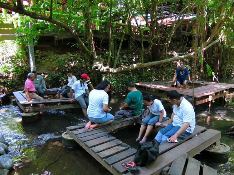 河中央的野生活鱼足疗。
