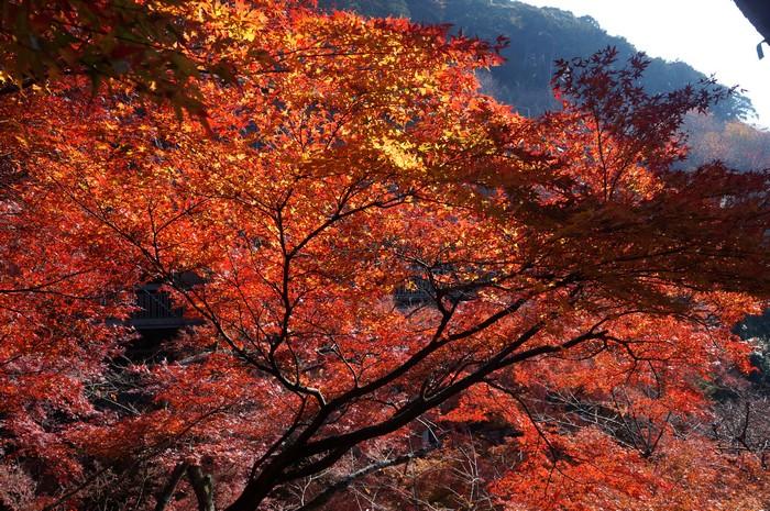 典雅脱俗的秋景