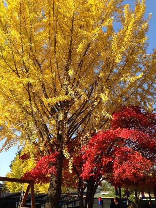 韩国的秋季是旅游旺季,红、黄叶交织出来的景致非常讨喜。