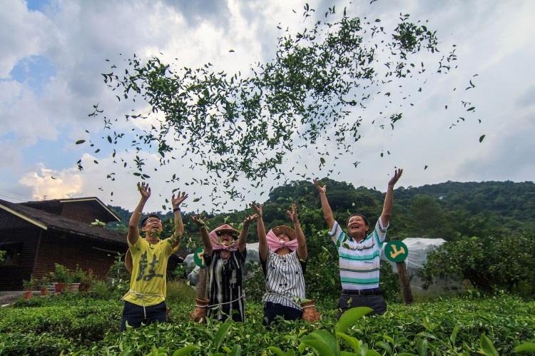 """现採茶菁--位于宜兰县冬山乡全国第一座休閒农业示范区的""""內山茶园"""",可体验现採茶菁,乐趣无穷。"""
