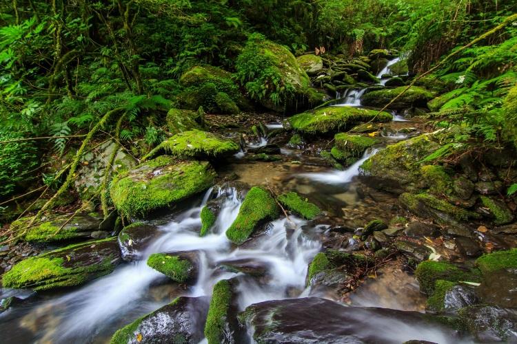 溪流美景--拉拉山神木区位于桃园县復兴乡和新北市乌来区交界,属于台湾面积最大的红檜森林里及自然保护区。游客可慢行步道,近距离观赏24棵神木,更不要忘了区中苔蘚溪流美景。