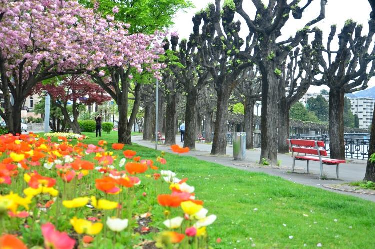 整个行程当中, 最有春天气息的就是卢加诺,粉嫩的花草撑涨了空气的甜美度。