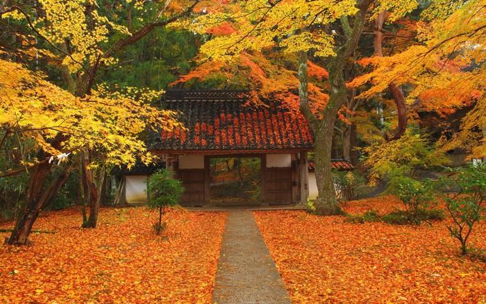 chuson ji late autumn
