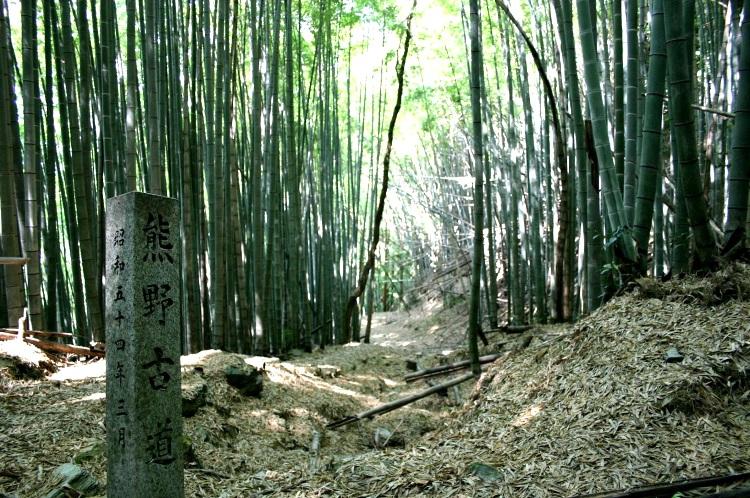 熊野古道。