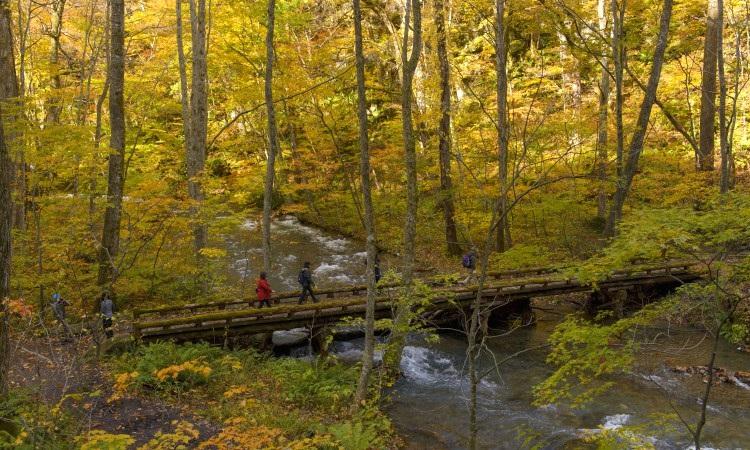 漫步奥入濑溪流,彷如置身山水名画中,怡然自得。