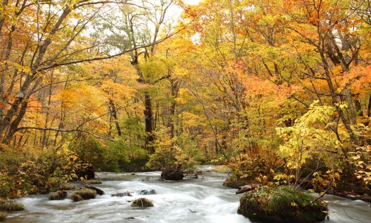 唯美的秋景,总是给人依依不舍的心情...