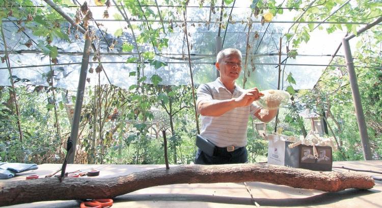 多样体验‧到果园学习嫁接工具的操作使用,体验小雨伞功用及组装。