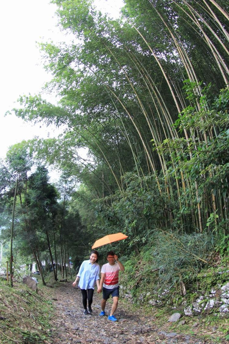 达观农场‧漫步在绿意盎然的竹林步道。