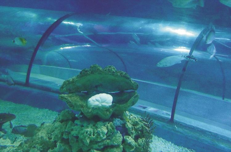 巨型珍珠就在四公尺的海底隧道中。