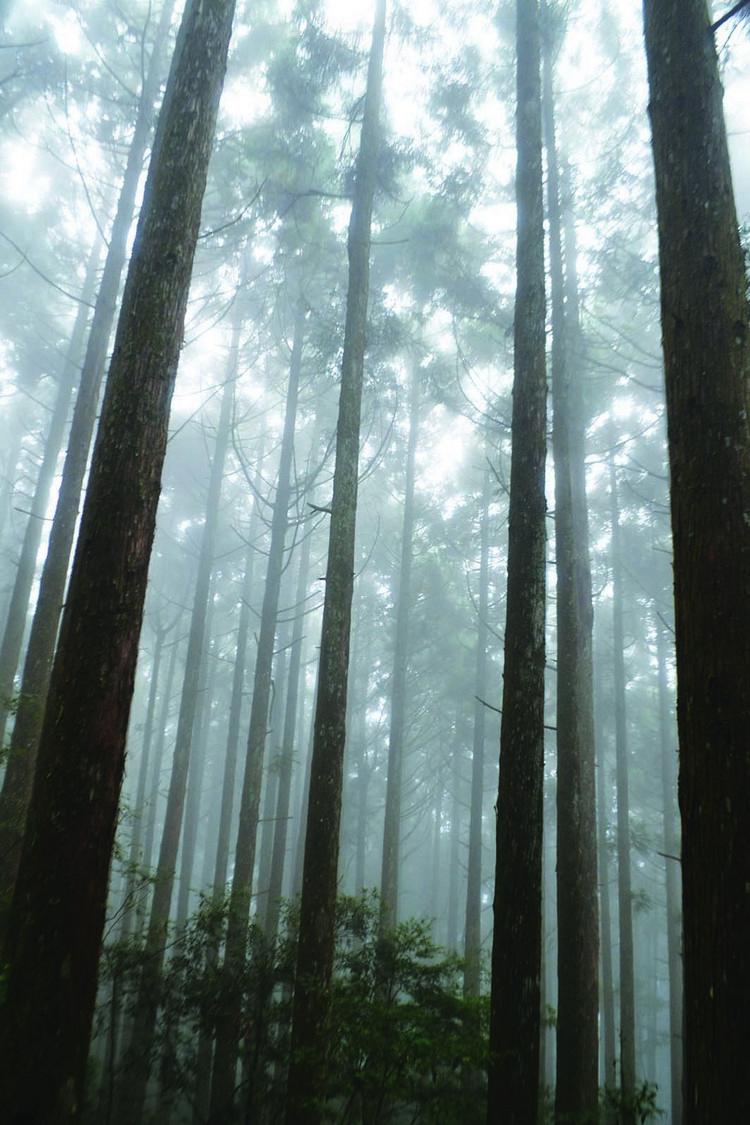 页码瞰山的森林因为地理关系布满云雾,好像《哈利波特》的禁忌森林。