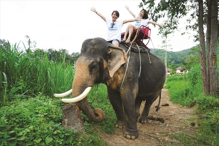 """大象带着我去散布,谢谢你""""Pahg""""。"""