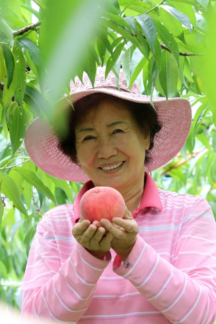 水蜜桃成熟期采果活动,让游客上山游玩采果尽兴。