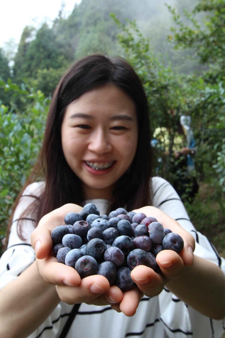 雪霸休闲农场‧蓝莓园体验区,让游客体验采果趣。