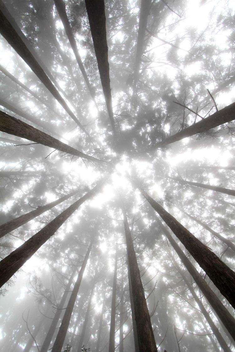 观雾森林游乐区‧漫步林道之间,时而云雾缭绕、时而阳光洒落变化万千。
