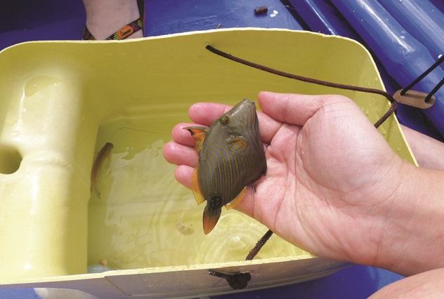 虽然钓获的只是一般小鱼,但过程却有大大的满足感。