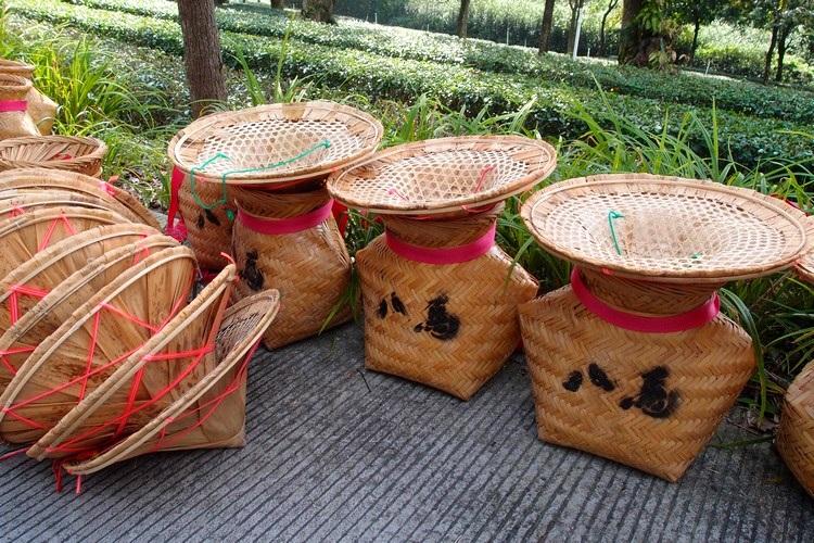 采茶用具不繁琐,将传统的竹篓系在腰间上。戴上采茶帽就能进行采茶工作。