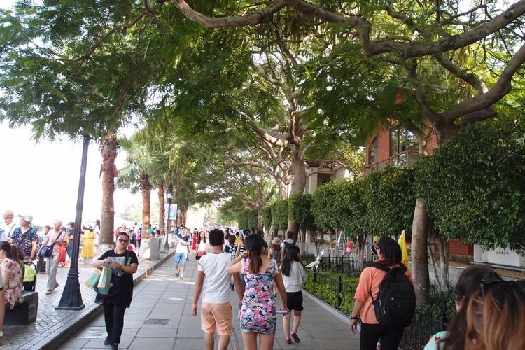 """走在鼓浪屿,沿路都有""""绿顶""""遮阴,绿意的环境让人感觉悠闲自在。"""