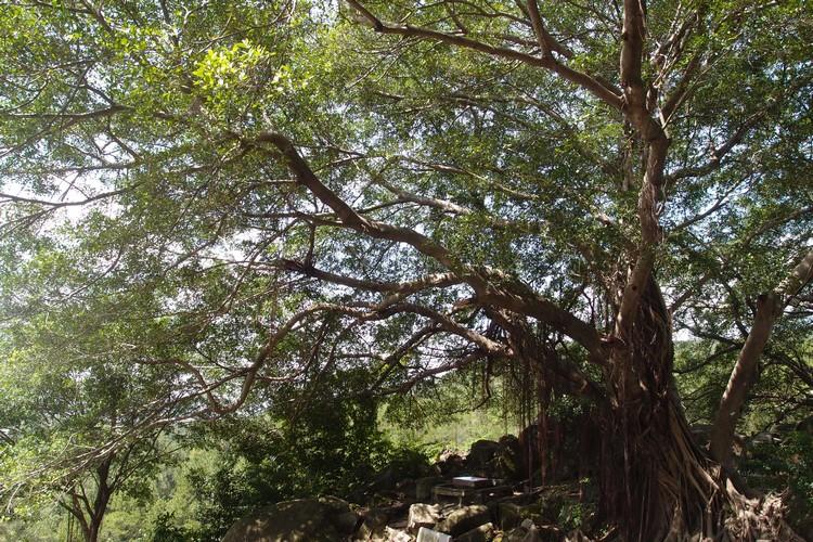 数颗壮观的百年榕树屹立在北辰上高处,呈现出另一道诗意如画的风景。
