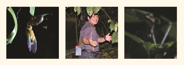 农场活宝——大象老师细心地向我们讲解夜晚的生态环境是农场重点的巡游活动。盲蛛和蝉的讲解尤其生动趣怪。